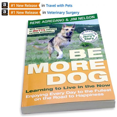 be more dog new release