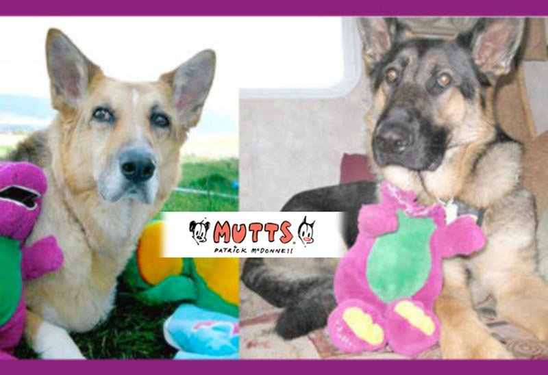 mutts two tripawds
